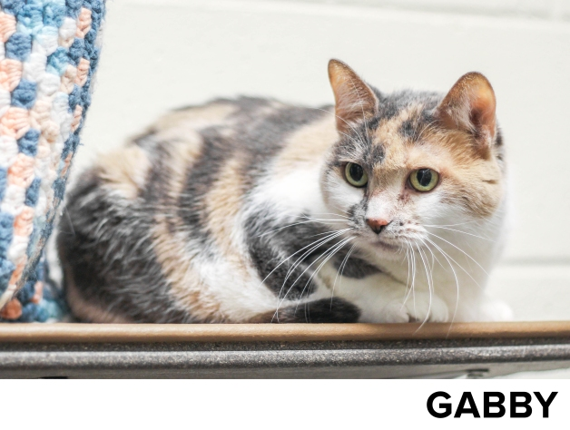 Gabby1