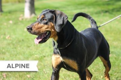 Alpine2_Name