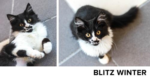 BlitzWinter_Name
