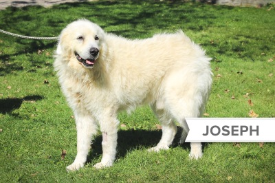 Joseph1_Name