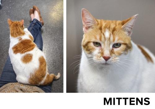 Mittens2