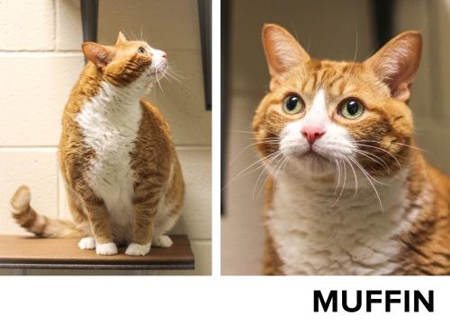 Muffin_Name