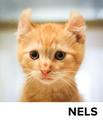 Nels_Blog